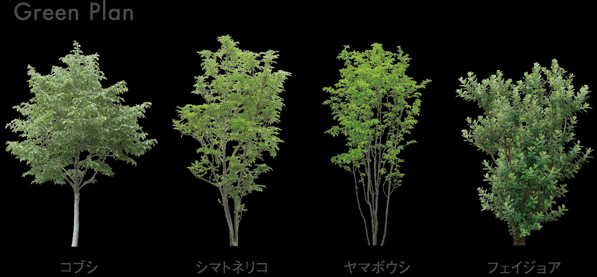 Green pran